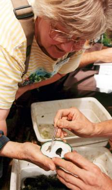 LakeWatch Volunteers learn to collect and identify macroinvertebrates